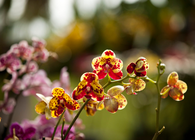 The Orchid Show at the NYBG